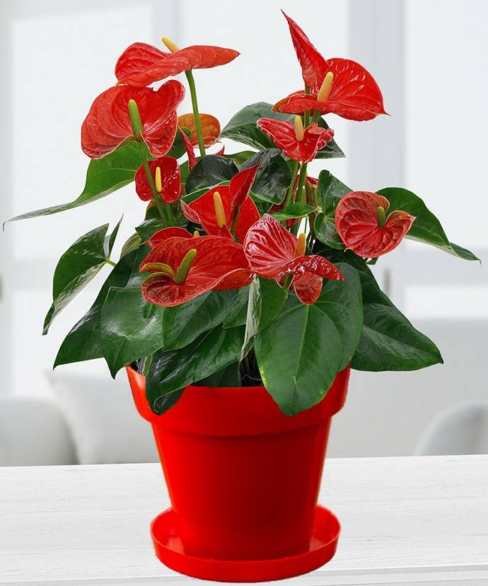 Easy growing best indoor houseplants for india for Best easy indoor plants
