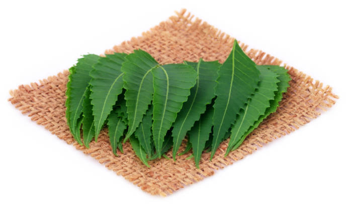 How to get rid of dandruff with neem leaves? / Neem paste