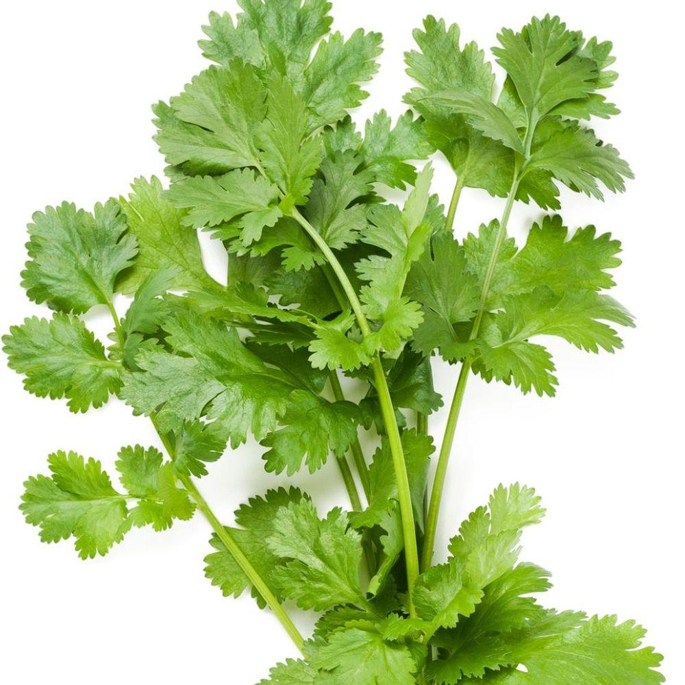 Coriander / parsley